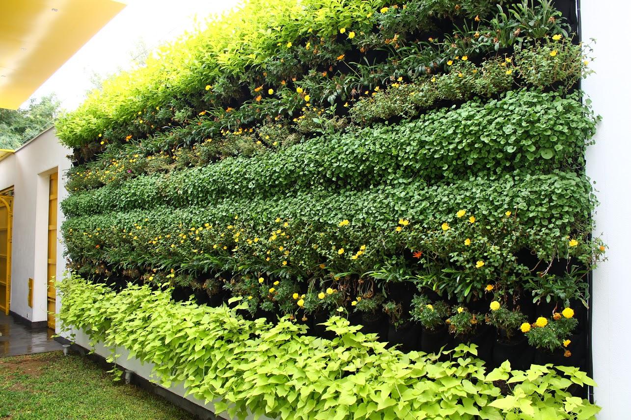 Greeen huichol piedras negras jardines alternativos for Jardines verticales construccion